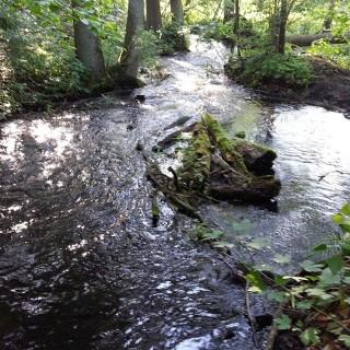 Spływy kajakowe lubuskie zdjęcia rzeki