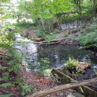Pliszka Ilanka spływ kajakiem